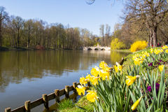 Lake in the park of Chopin Warsaw. Narcissus flower near a lake in the park of Chopin Warsaw Royalty Free Stock Images