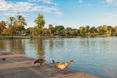 The lake in the park Royalty Free Stock Photos