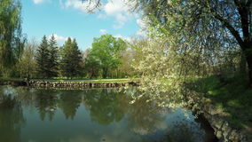 Lake in park. Steadicam pans camera on lake in park stock video footage
