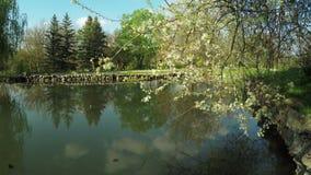 Lake in park. Steadicam pans camera on lake in park stock video