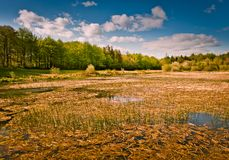 Lake in  park on sunny day, Ireland Royalty Free Stock Images
