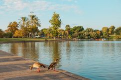 Lake in a park in Tel Aviv Royalty Free Stock Photo