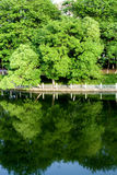 Lake in the park with trees Royalty Free Stock Image