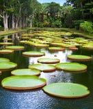 lake in park with Victoria amazonica, Victoria regia. Stock Image