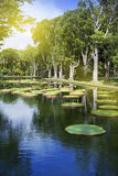 The lake in park with Victoria amazonica, Victoria regia. Mauritius Stock Photos