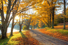 Lake pathway with yellow leaves stock photo