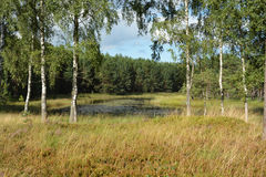 Lake peat royalty free stock photos