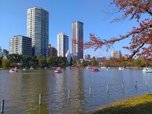 Ueno Park. Lake with pedal boats in Ueno park in autumn, Tokyo, Japan Stock Photos