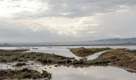 Lake with pelicans. Lake of Kenia with pelicans and mountains in the background in a cloudy day Stock Images