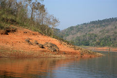 Lake, Periyar National Park Stock Photo