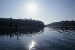 Lake Periyar National Park, Kerala, India Royalty Free Stock Image