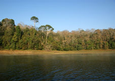 Lake, Periyar National Park, Kerala, India Royalty Free Stock Photos