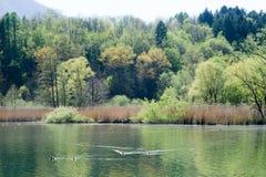Lake Piano reserve on Menaggio  valley Royalty Free Stock Photo