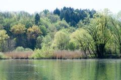 Lake Piano reserve on Menaggio  valley Royalty Free Stock Photos