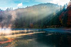 Lake among the pine forest in autumn stock photo