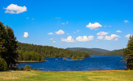 Lake in pine forest. Stock Photo