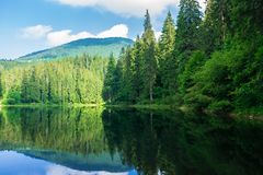 Lake among the pine forest royalty free stock photos