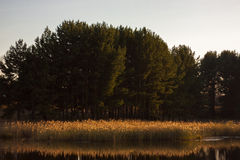 On the lake Stock Image