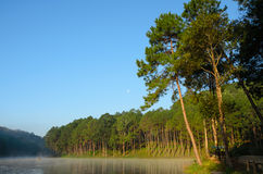 Lake and pine tree at Pang Ung,Thailand Royalty Free Stock Photography