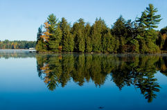 Lake with Pine Trees Royalty Free Stock Photography