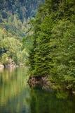 Lake and pine trees Royalty Free Stock Photo