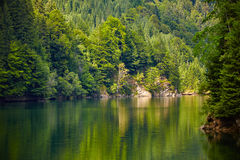 Lake and pine trees Stock Images