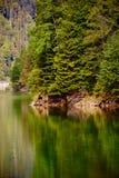 Lake and pine trees Stock Photos