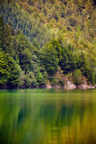 Lake and pine trees Stock Image