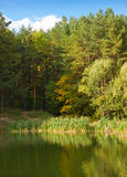Lake, pines and autumn Royalty Free Stock Photo