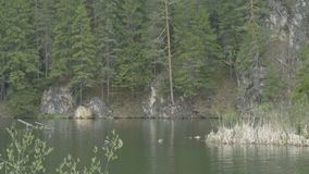 Lake, Pines and Cliffs View stock footage