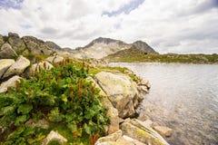 Lake on Pirin Mountain Stock Images