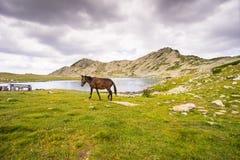Lake on Pirin Mountain Royalty Free Stock Photo