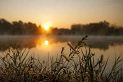 Lake plant grass in early morning Stock Image