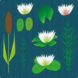 Lake plants set illustration Royalty Free Stock Photography
