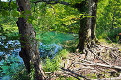 Lake in Plitvice National Park, Croatia Stock Photography