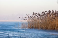 Lake Pogoria. Winter time landscape in Poland Royalty Free Stock Image