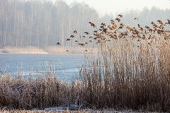 Lake Pogoria. Winter time landscape in Poland Stock Images