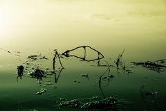 Lake that is poisoned and polluted. Yellow-green image on a lake that is poisoned and polluted Royalty Free Stock Photos