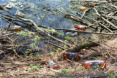Lake pollution. Environmental pollution with plastic bottles and other waste on a small forest lake royalty free stock photos