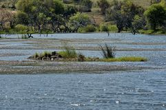 Lake (pond) in Pilanesberg National Park Stock Photo