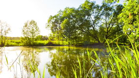 Lake pond with a tree stock footage