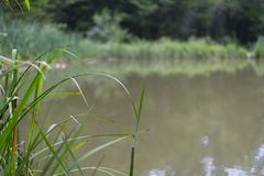 Green grass and trees on the banks of the pond in natural light royalty free stock image