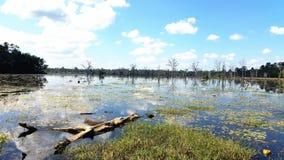 Lake in Preah Neak Pean, Siem Reap, Cambodia Stock Photography