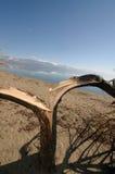 Lake Prespa, Macedonia Royalty Free Stock Images