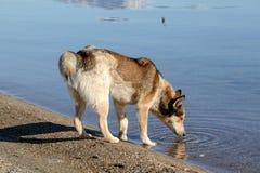 Lake prespa in macedonia in winter Royalty Free Stock Photography