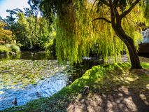 Lake in the public Beacon Hill Park, Victoria BC Canada Stock Images