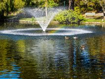 Lake in the public Beacon Hill Park, Victoria BC Canada Stock Photography