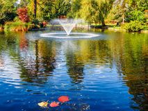 Lake in the public Beacon Hill Park, Victoria BC Canada Royalty Free Stock Images