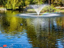 Lake in the public Beacon Hill Park, Victoria BC Canada Royalty Free Stock Photos