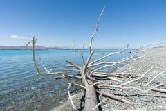 Lake Pukaki, South Island NZ Stock Images